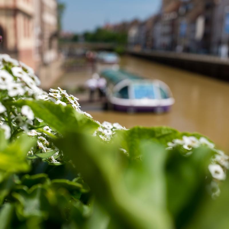 Glasdachboote auf der Ill rund um die Strassburger Altstadt